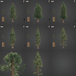 2021 PBR Incense Cedar Collection - Calocedrus Decurrens 3D