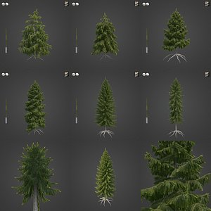 2021 PBR Brewers Spruce Collection - Picea Breweriana 3D model