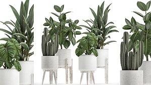 3D model Collection of decorative plants in white flowerpots 923