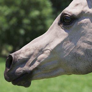 3D stallion grey