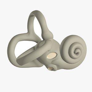 3D inner ear bony labyrinth model