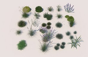 Flowers and grass plants wild flowers and grass lavender 3D