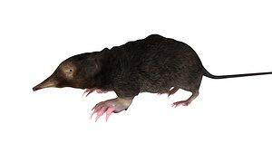 mole 3D
