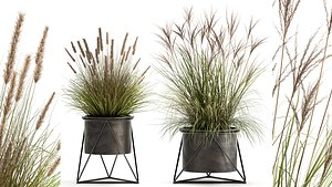 Reeds in a rusty Flowerpot for the interior 980 3D