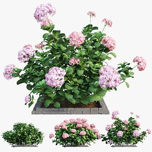 plants hydrangea set 14 model
