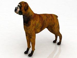3D Boxer Dog model