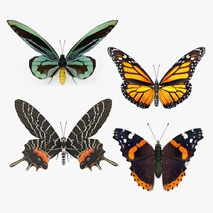 Rigged Butterflies Collection 3 3D model