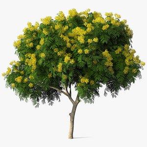 3D peltophorum pterocarpum tree flowers model