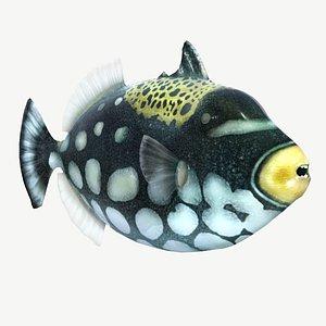 clown triggerfish 3D model