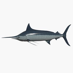bulue marlin 3d model