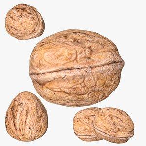 3D model Walnut