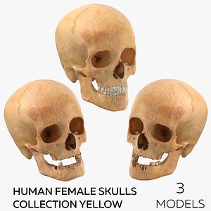 Human Female Skulls Collection Yellow - 3 models 3D