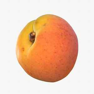 04 hy apricot fruit 3D model
