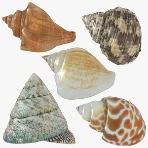 sea shell seashell model