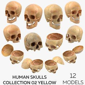 3D model Human Skulls Collection 02 Yellow - 12 models