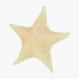 White Natural Starfish Raw Scanned 3D model