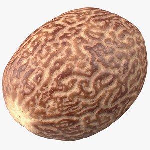 3D Shea Nut Peeled model