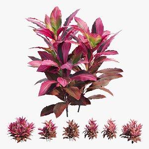 Cordyline fruticosa plant set 06 3D model