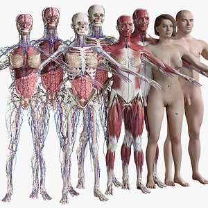 3D Female and Male Complete Anatomy