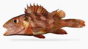 Juvenile Copper rockfish 3D model