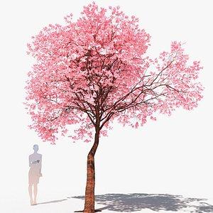 3D cherry tree flowering  prunus avium C