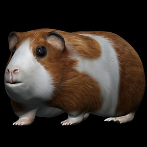 fully rigged low poly  Hamster 3D