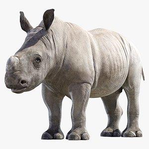 Rhino Baby model