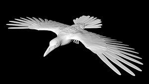 3D raven bird crow