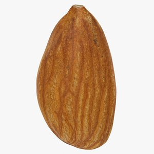 Raw Almond 3D model