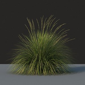 XfrogPlants Deergrass - Muhlenbergia Rigens 3D model