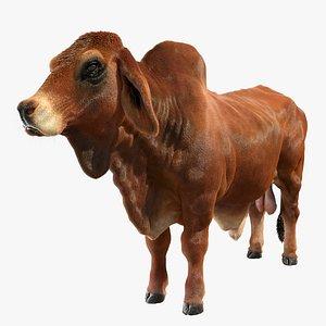 3D indian bull