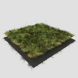 meadow patch bloodwort 3D