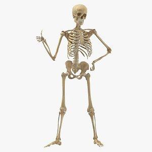 3D Real Human Female Skeleton Pose 77 model