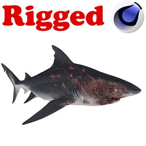 3D Scarred  Shark Rigged model
