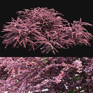 3D bush hedge shrub model