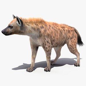 3D Hyena Walking Pose Fur model