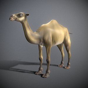 rigged camel 3D model