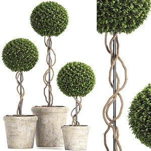 Preserved Boxwood Tree Topiary RH - Indoor Plant 220 3D model
