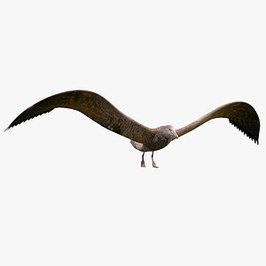 bird petrel 3D