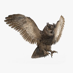 3D owl animations model