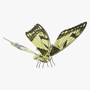 3D papilio machaon butterfly