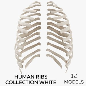 Human Ribs Collection White - 12 models 3D model