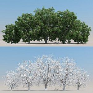 summer juglans tree leaves 3D model