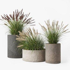 3D pennisetum pot concrete