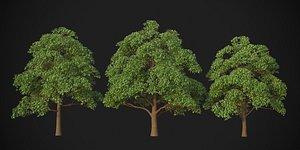 XfrogPlants Red Oak - Quercus Rubra model