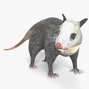 3D Animated Opossum
