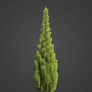 2021 PBR Eastern Arborvitae Collection -Thuja Occidentalis 3D model