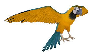 3D model Blue and Gold Macaw Parrot 3D model