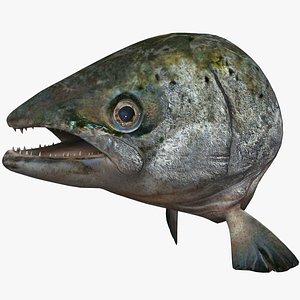 3ds max salmon