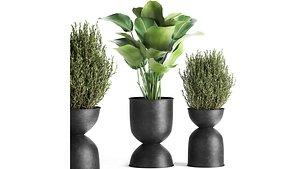 3D model plants interior pots